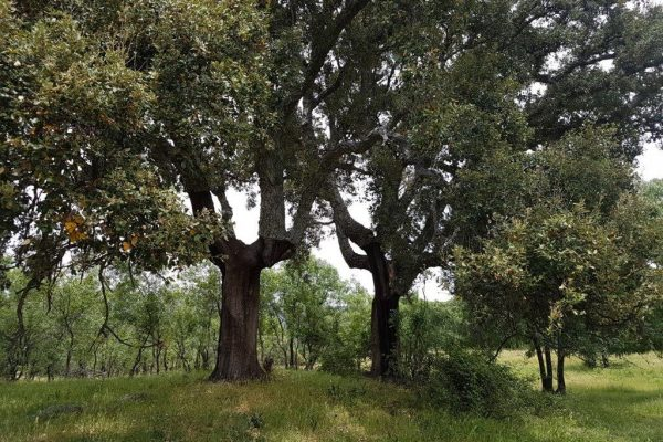 Farm in Valley of River Tietar - Trees.