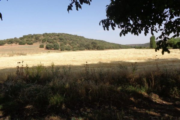 Farm and minor hunting in Ciudad Real - Agricultural lands and low mountain in the background